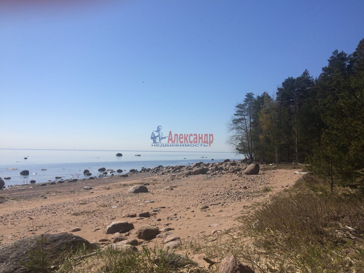 пески ленинградская область фото организме человека
